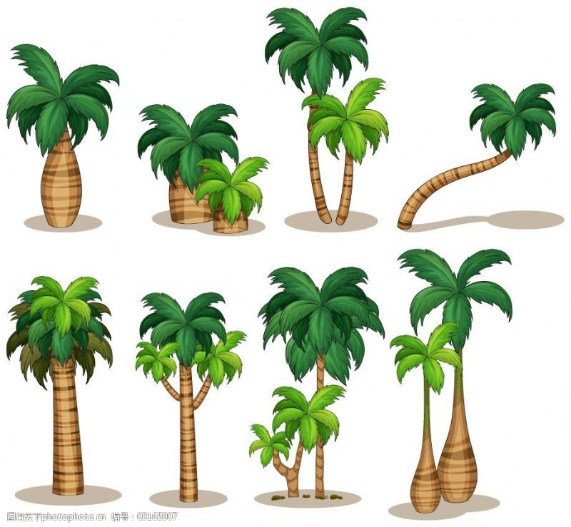 大王椰子树图片素材装修设装修设计图片