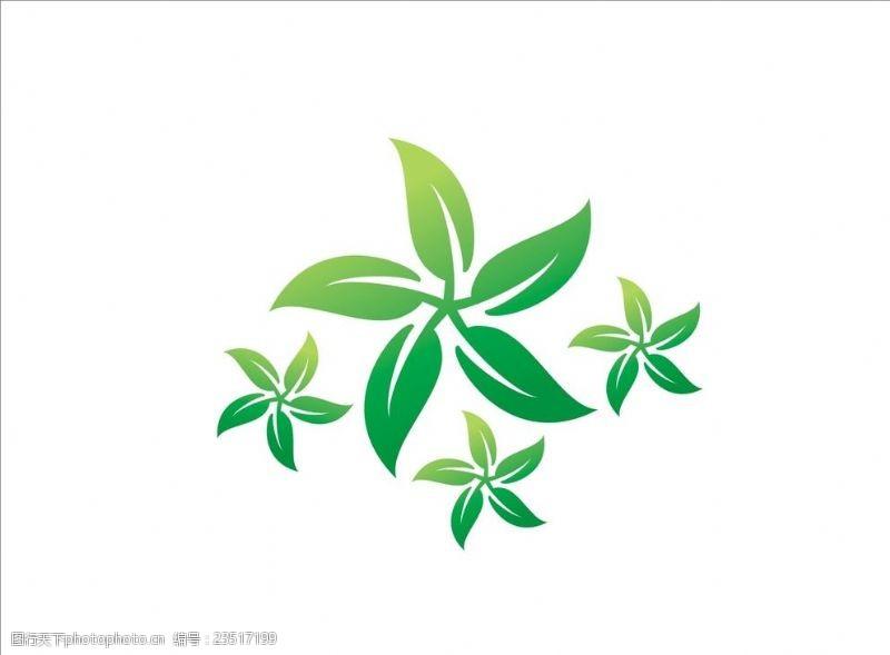 香港五叶草树叶嫩