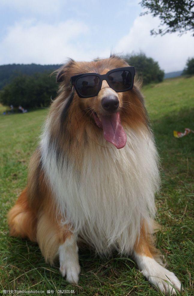 带墨镜的狗狗狗带妆照图片