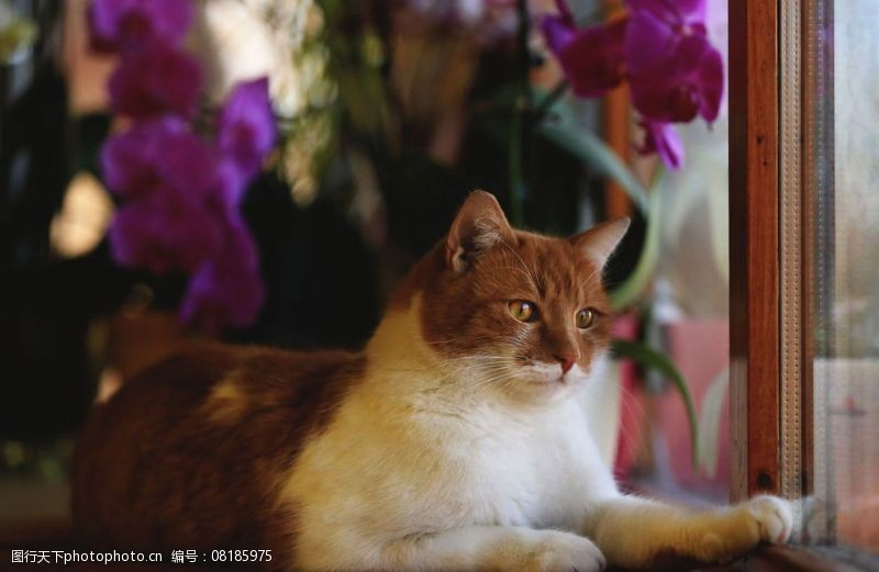 宠物之家猫咪图片