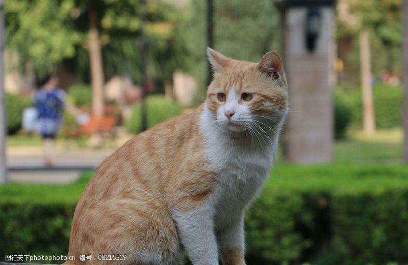 宠物之家小猫图片