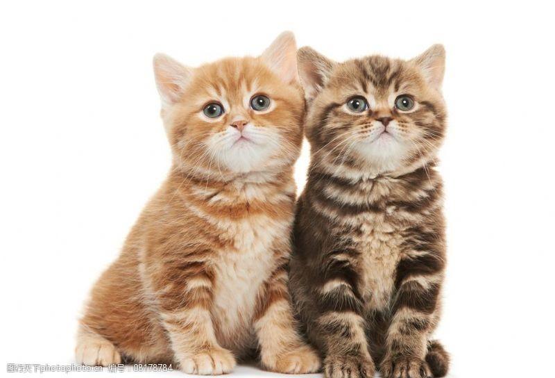 宠物之家宠物猫图片
