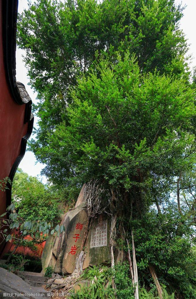 树木葱茏于山风景区图片