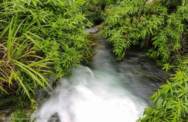 树木葱茏花溪公园图片