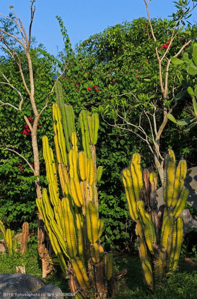 树木葱茏天涯海角图片