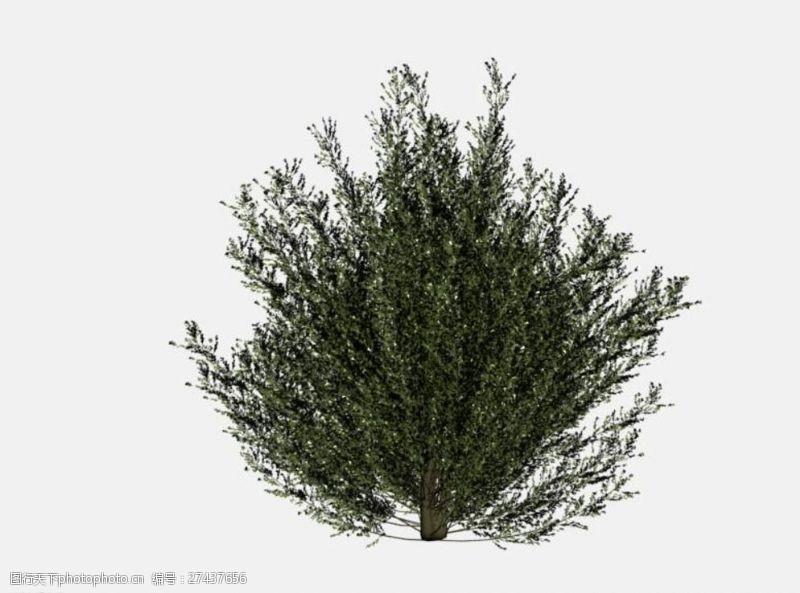花草模型灌木模型图片