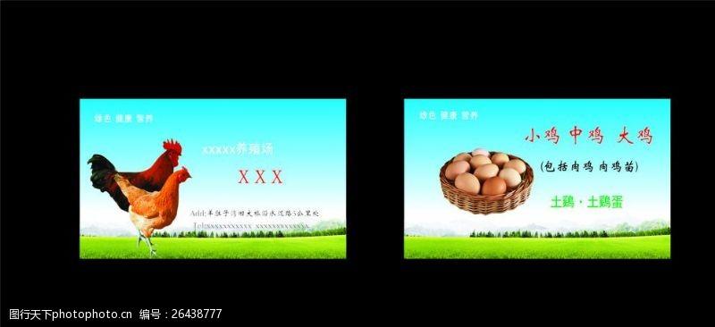 土鸡蛋名片养鸡名片图片
