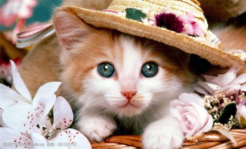 宠物之家小猫咪图片