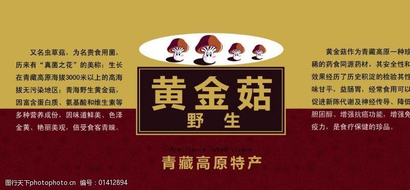 祁连山黄菇黄菇图片